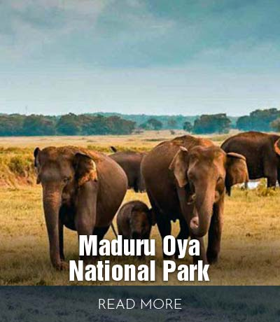 Maduru-Oya-National-Park-02